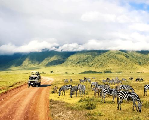 Tanzania LGBTQ Safaris